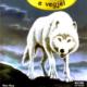 16 Misteri i ujkut te bardhe